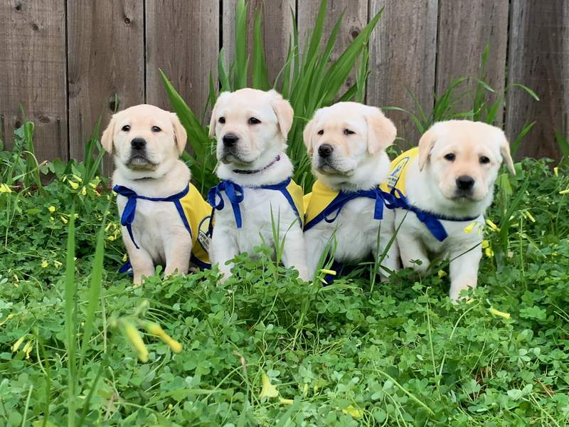 Image Credit: Canine Companions for Independence