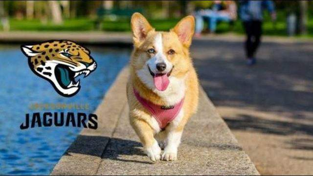 The Jacksonville Jaguars announce the team will be adding a dog park to the south end zone.