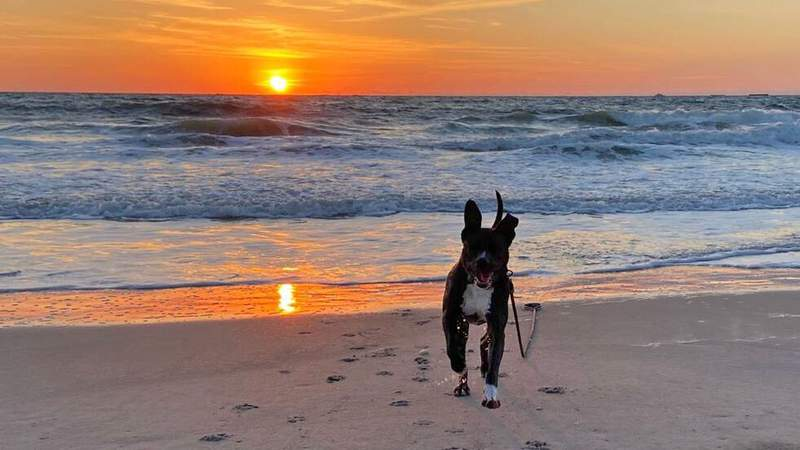 donronricosuave shared this photo of a dog enjoying another beautiful sunrise at Ponte Vedra Beach.
