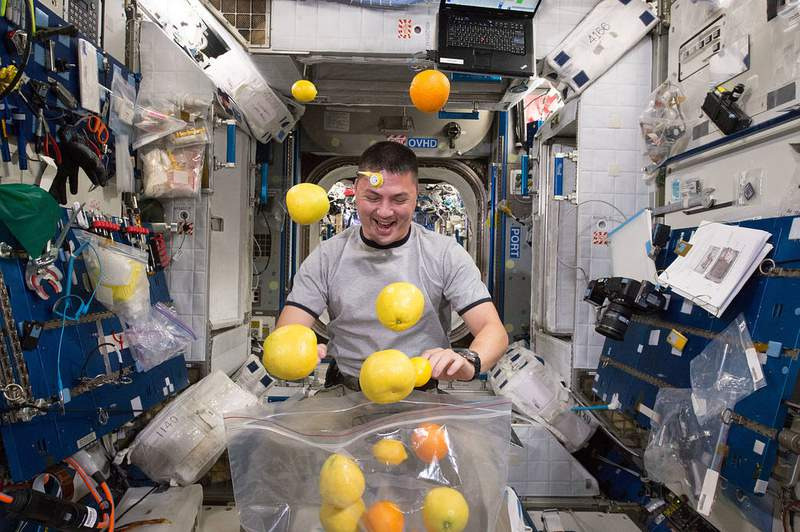 NASA astronaut Kjell Lindgren corrals the supply of fresh fruit that arrived August 25, 2015 on the Kounotori 5 H-II Transfer Vehicle (HTV-5.)  Visiting cargo ships often carry a small cache of fresh food for crew members aboard the International Space Station. (Image: NASA)
