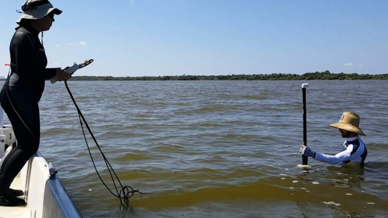 Scientists study the Indian River Lagoon as Florida sees record manatee deaths