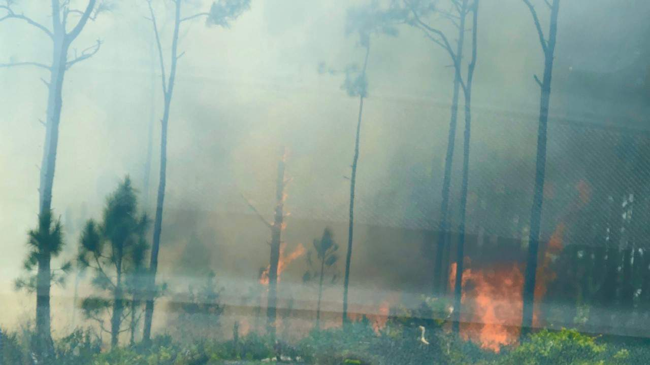 Gender reveal party blast sparks 10-acre wildfire in Florida