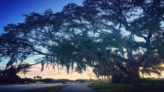 Seminole Wekiva Trail (Photo by Britte Lowther)