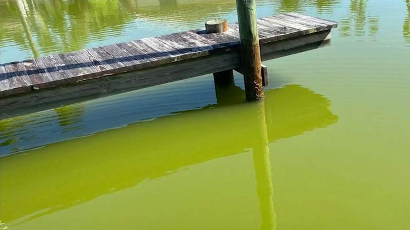 New Indian River Lagoon report card expected to show more pollution concerns