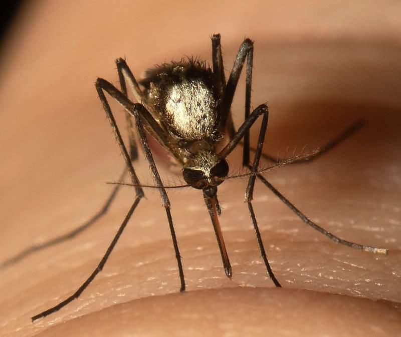 A new invasive mosquito that spread yellow fever has landed in south Florida and could spread northward across the state.