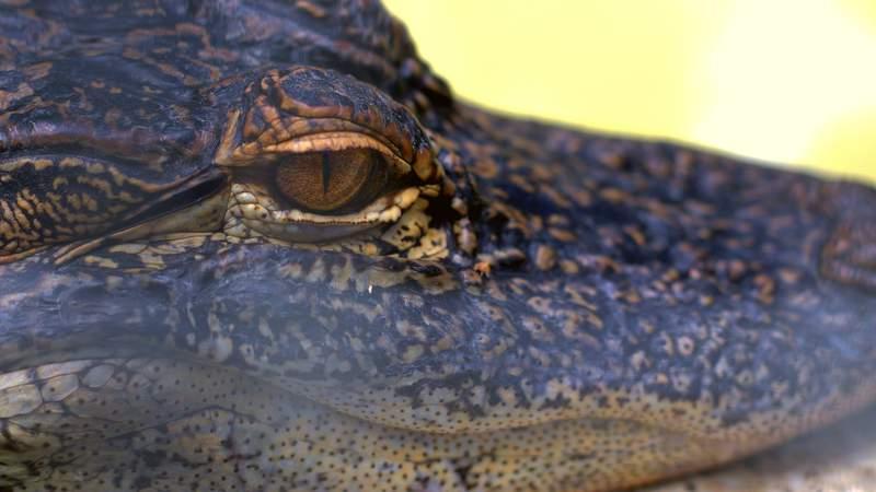Wild Florida Safari (Photo: Tom Metevia)