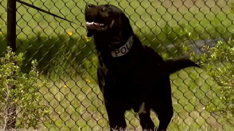 Electronics-sniffing K-9 saving children from child abuse