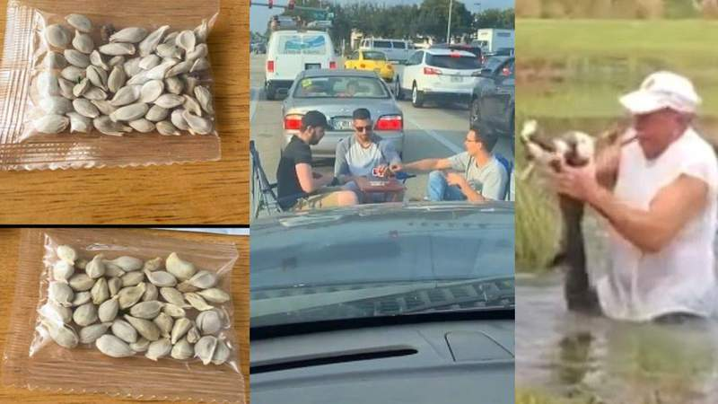 23 of the strangest things that happened in Florida in 2020