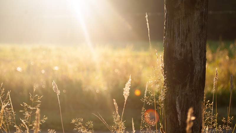 Morning sunshine over a field