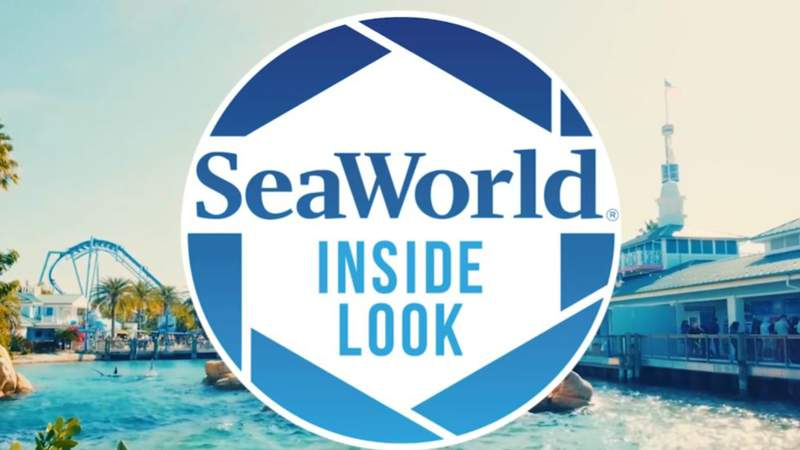 SeaWorld Orlando Announces Fall Inside Look Weekends with Limited Capacity for a Peek Behind-the-Scenes of a World Class Animal Care Facility