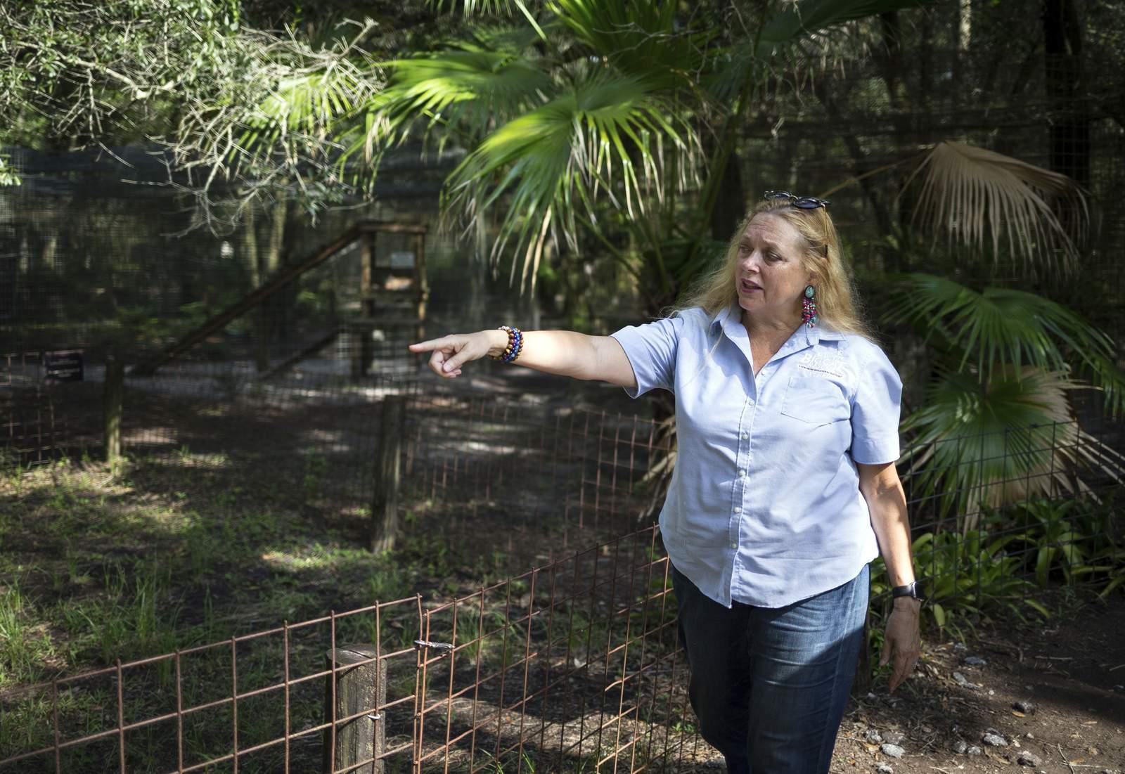 FILE - In this July 20, 2017, file photo, Carole Baskin, founder of Big Cat Rescue, walks the property near Tampa, Fla. (Loren Elliott/Tampa Bay Times via AP, File)