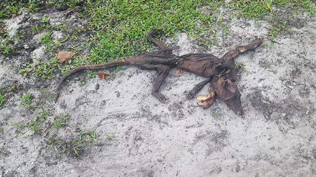 Image result for women found mysterious animal dead body in backyard