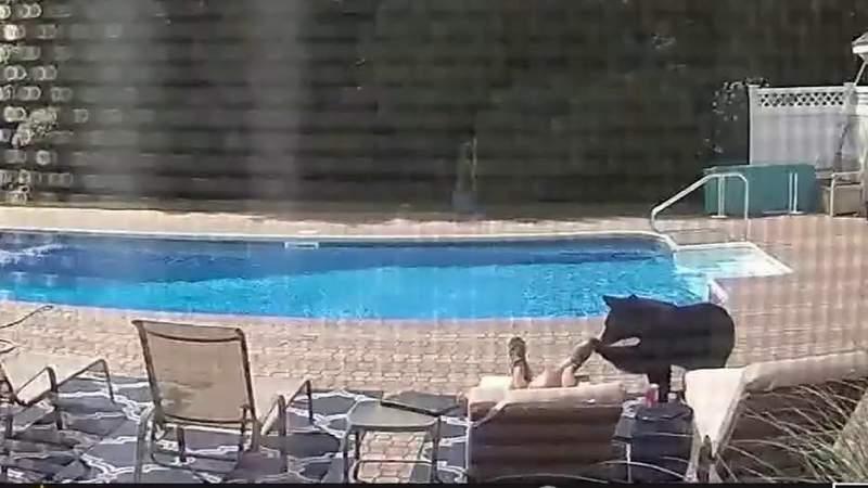 Bear interrupts man's pool-side nap