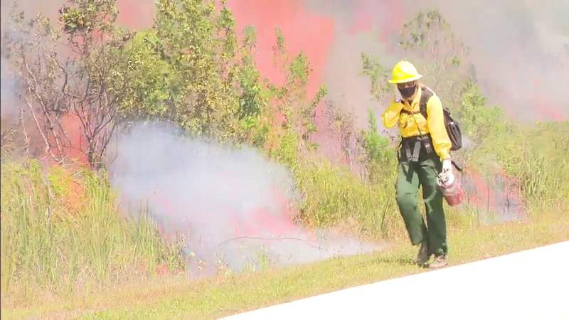 Controlled fires set in Florida Everglades to kill invasive plant species
