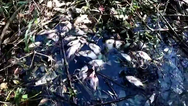 State finds 24 'possible violations' after massive Winter Springs fish kill