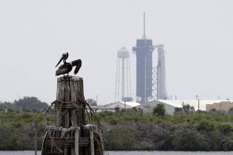 A pelican pauses on a barrier in front of the SpaceX Falcon 9, where NASA astronauts Doug Hurley and Bob Behnken in the Dragon crew capsule, will lift off from Pad 39-A at the Kennedy Space Center in Cape Canaveral, Fla., Wednesday, May 27, 2020. For the first time in nearly a decade, astronauts will takeoff towards orbit aboard an American rocket from American soil, a first for a private company. (AP Photo/Chris O'Meara)