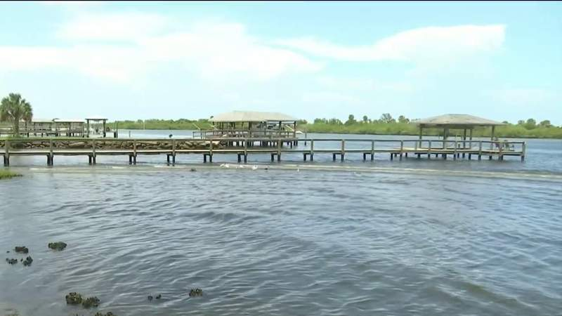 Local governments work to clean Indian River Lagoon as more manatee deaths are reported