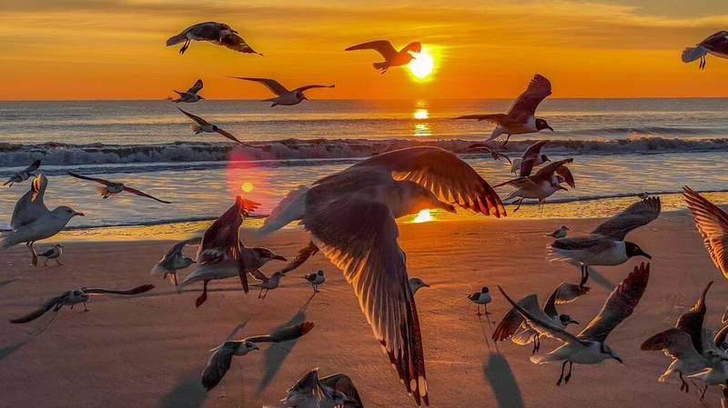 SnapJax user FireDude04 shared this photo of seagulls taking flight during a sunrise over Jacksonville Beach.