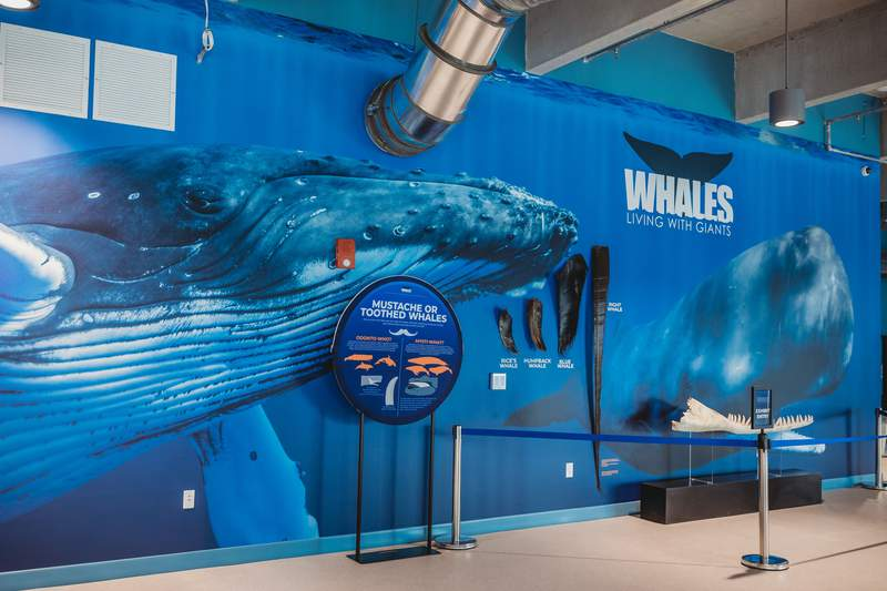 Whales: Living With Giants