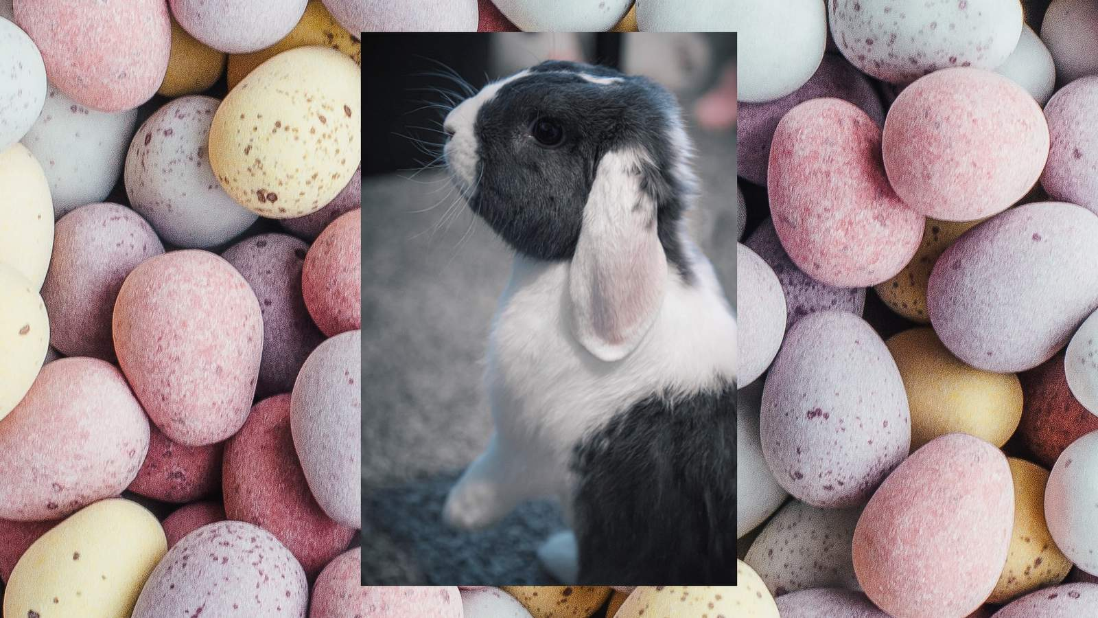 Wanting An Easter Bunny Of Your Own Here S What You Need To Know Before Getting A Pet Rabbit