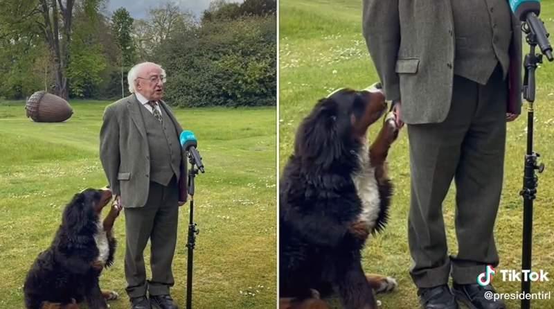 Misneach pawing at Irish President Michael Higgns while he speaks to reporters. (Credit: @PresidentIRL/TikTok)
